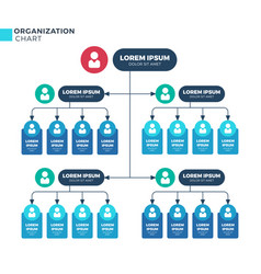 business structure of organization vector image vector image