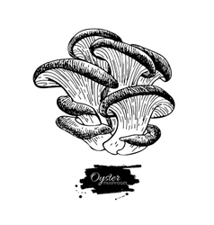 Oyster mushroom hand drawn vector image vector image