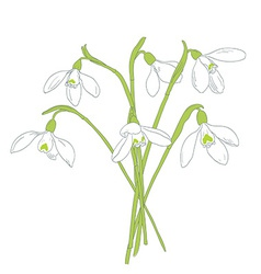 Snowdrops spring bouquet Hand-drawn vector image