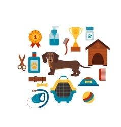 Dachsund dog infografic concept with dog care vector image