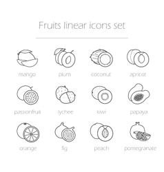 Fruits linear icons set vector