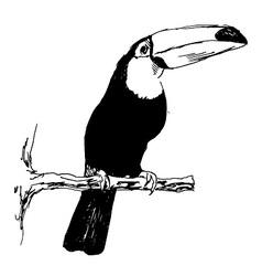 Hand sketch toucan vector image