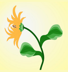 yellow flower rudbeckia in the background of vector image
