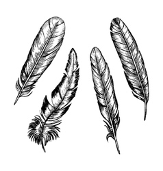 Feathers Set Hand Draw Sketch vector