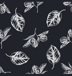 seamless pattern with hand drawn chalk ficus vector image