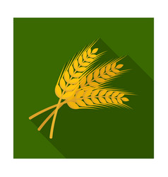Sprigs of wheat plant for brewing beer pub vector