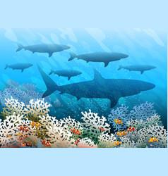 swimming shark shoal vector image