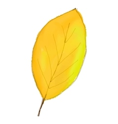yellow leaf isolated on white background Digital vector image