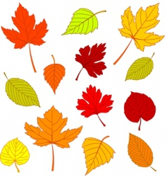 autumn leaves on white vector image
