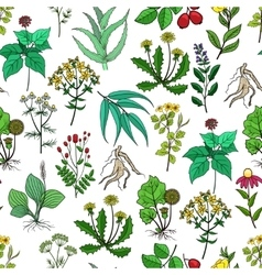 Drug plants and medicinal herbs background vector image