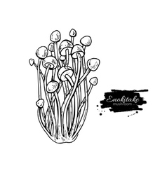 Enokitake mushroom hand drawn vector
