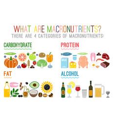 Main food groups macronutrients vector