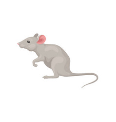 Small gray mouse standing on hind legs side view vector