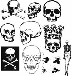 grunge skulls and bones vector image