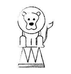 Lion on stool circus or carnival icon image vector