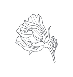 Rose Bud Monochome Drawing For Coloring Book vector image vector image