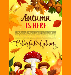 Autumn leaf fall in forest greeting poster vector