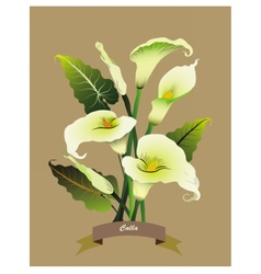 Calla flowers bouquet vector image