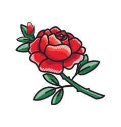 closeup of rose with petals vector image