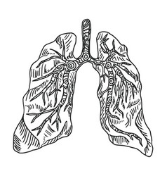Doodle drawing organ lung on a white background vector