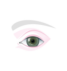 Eye and eyebrow blank schematic template vector