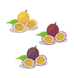 passion fruit2 vector image