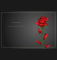 Red rose single flower on dark gray background vector