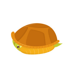 Scared green turtle hiding in its shell cartoon vector