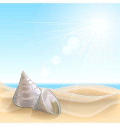 Shell on the beach vector image