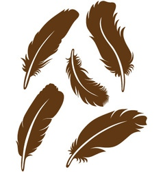 Feather set vector image vector image