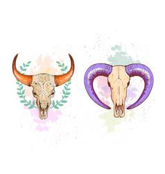 skull sheep and buffalo collection vector image