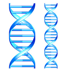 dna isolated seamless object set vector image