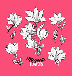 magnolia flowers freehand set vector image