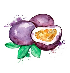 Watercolor isolated passion fruit vector