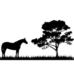 silhouette of horse and tree vector image vector image