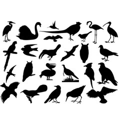 Birds silhouettes collection vector