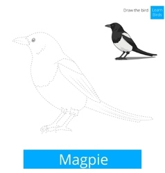Magpie bird learn to draw vector