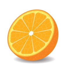 Orange half on white background vector