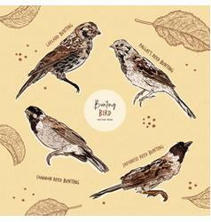set bunting bird hand draw sketch vector image