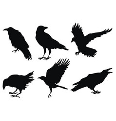 set ravens a collection black crows vector image