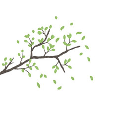 tree branch with green leaves over white vector image vector image