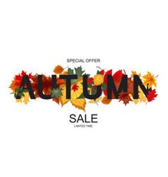 Abstract autumn sale vector
