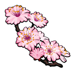 blossoming branch a tree pink flowers in spring vector image