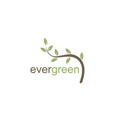 evergreen leaf organic logo vector image