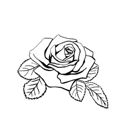 Rose sketch vector image