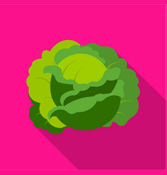 cabbage icon flat single plant icon from the big vector image vector image