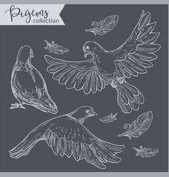 Flying pigeons set doves with plumage vector