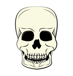 human skull cartoon vector image