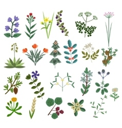 Set of Decorative Flowers vector image vector image