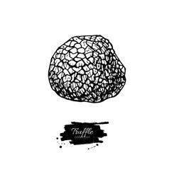 Truffle mushroom hand drawn vector